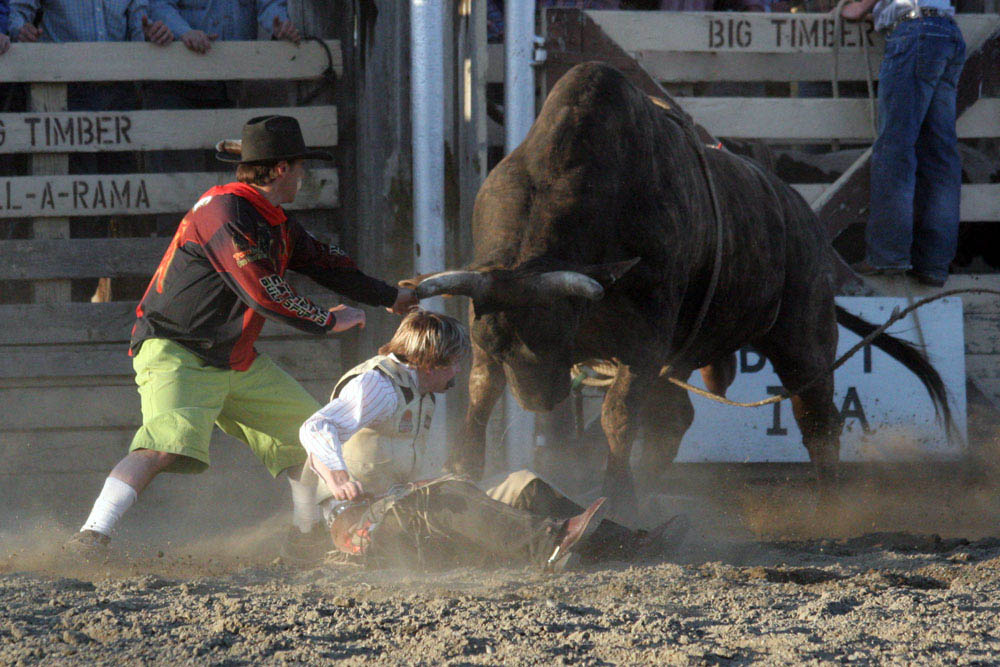 Bull Fight rodeo photo Montana Photographer MT